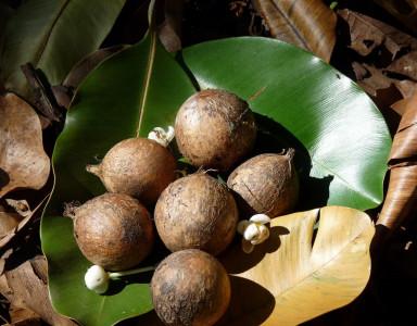 Découvrez l'incroyable action anti-âge de l'huile de Tamanu !